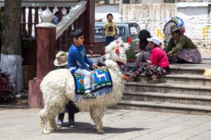 Peruanisches Kind sitzt auf weißem Alpaka